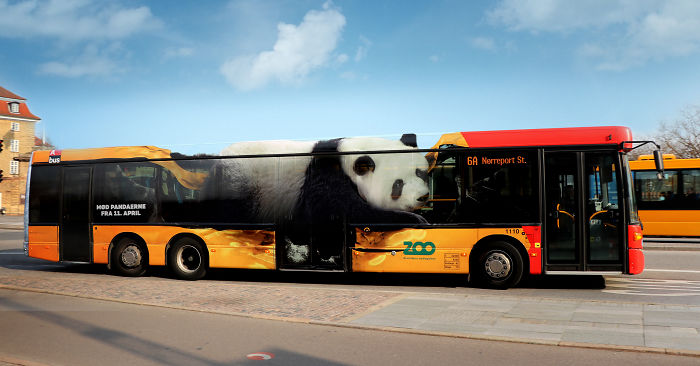 Copenhagen Zoo: The Giant Pandas Have Landed