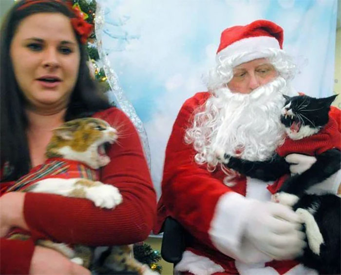 This Woman Took Her Cats To A Department Store To Visit Santa And As You Can See It Went Quite Well