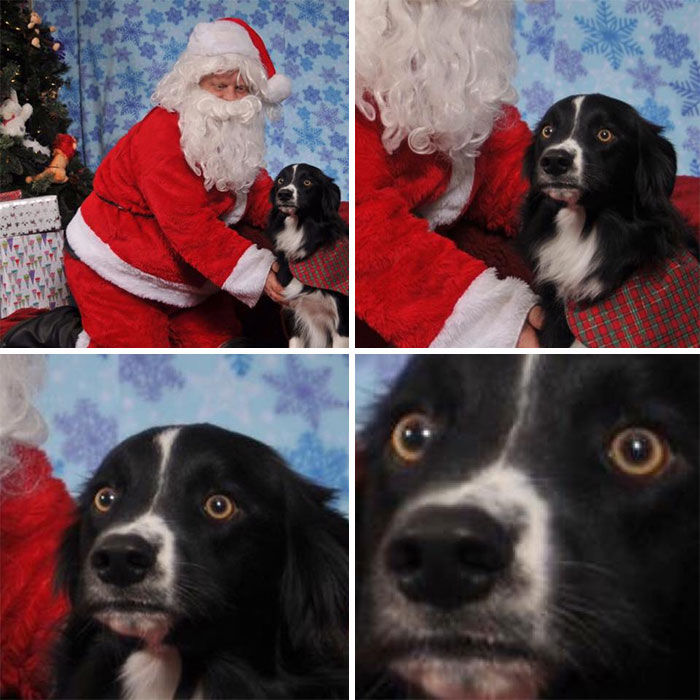 So, My Dog Met Santa Claus