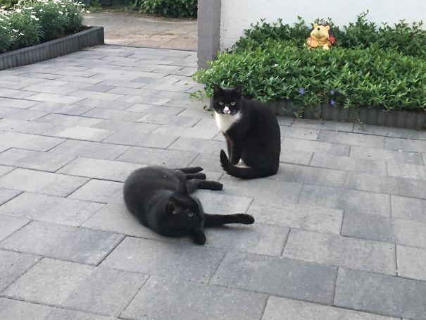 kitties-5dfe694a19c71.jpg