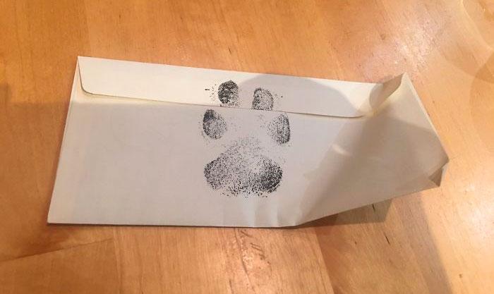 4 Chicos piden a su vecino que les deje jugar con su perro, y reciben una honesta carta en respuesta