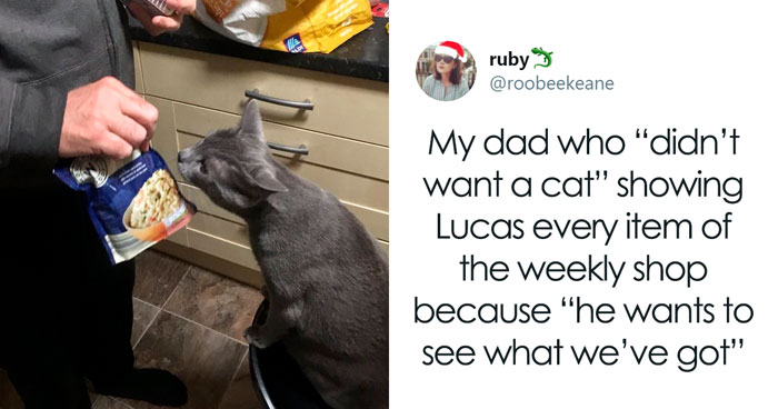 30 People Who Didn't Want Pets But Changed Their Mind Real Fast