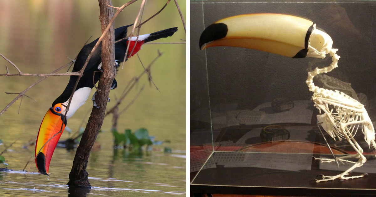 People Are Sharing Interesting And Weird Toucan Facts