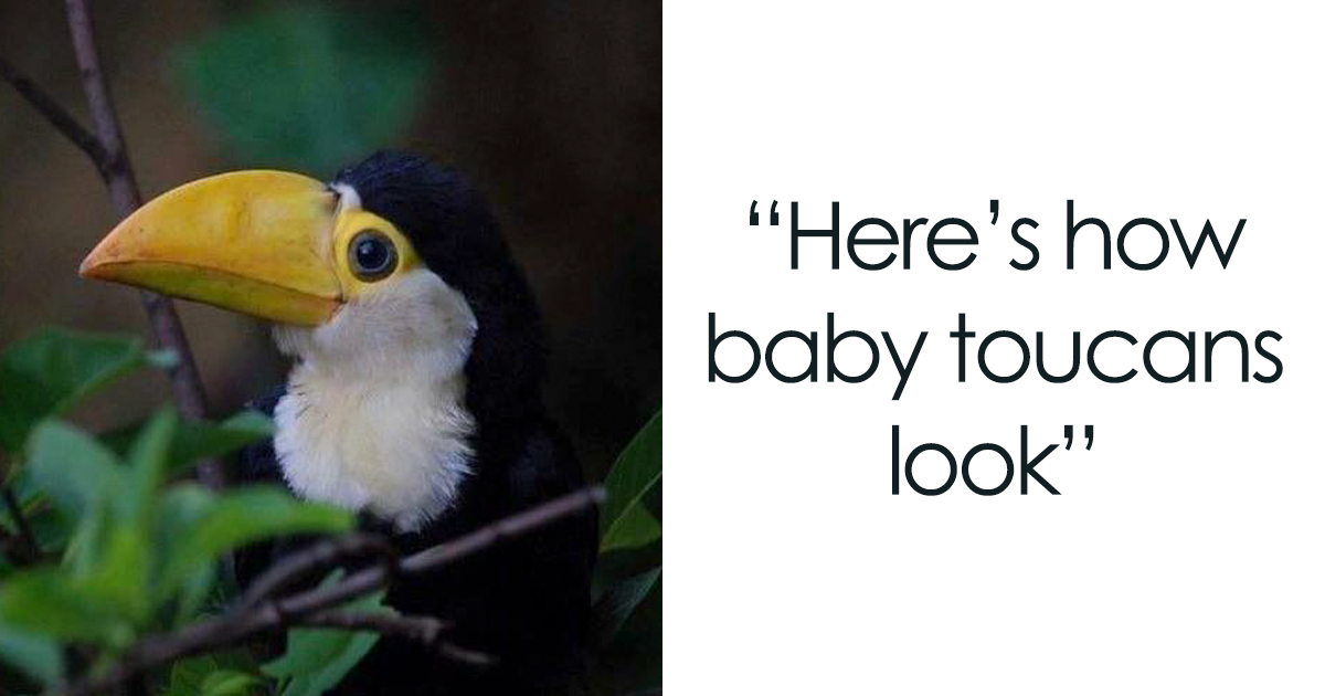 People Are Suddenly Realizing Toucans Are Weirder Than They Thought, Share Facts About Them In A Viral Thread