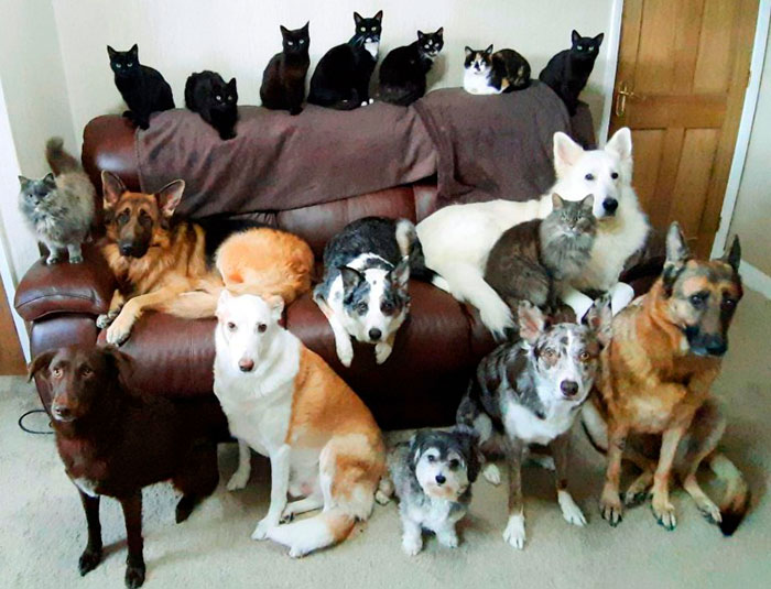 Woman Finally Manages To Get Her 17 Pets To Sit Still For A Photo