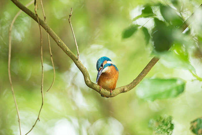 I Spent 35 Days In My Shed Just To Photograph The Captivating Kingfisher (27 Pics)