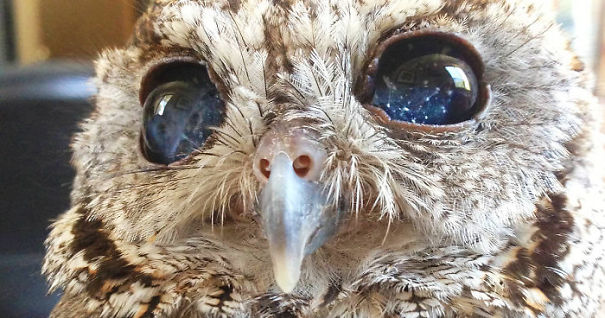 rescued-blind-owl-zeus-fb5__700-5df382f4493a5.jpg