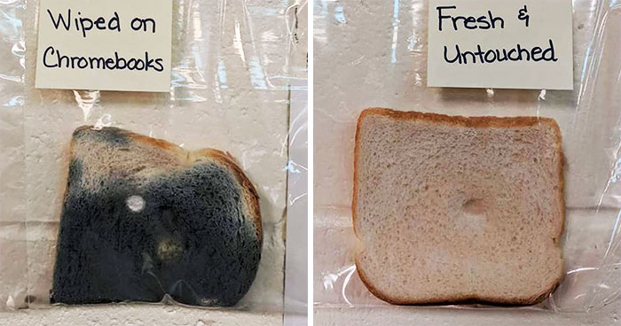 Elementary School's Science Experiment With White Bread Is Going Viral