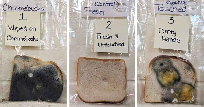 Elementary School S Science Experiment With White Bread Is