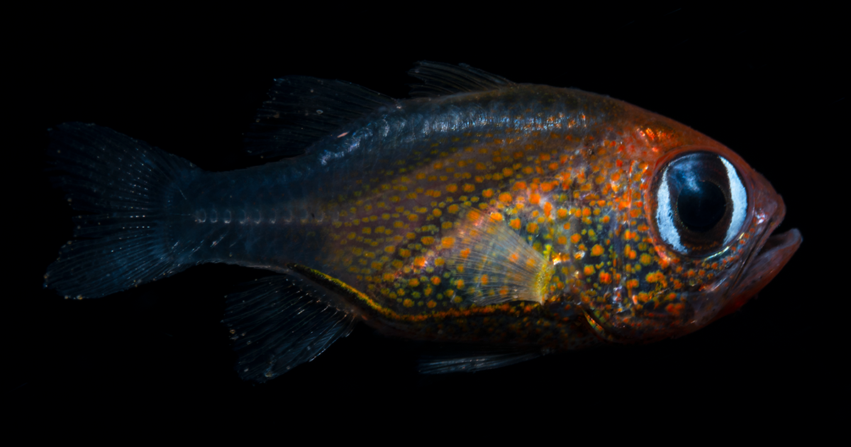 Scientists Have Discovered 71 New Species In 2019 And Here's How 25 Of Them Look