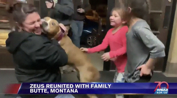 Stolen Pit Bull Found 2 000 Miles Away Returns Home For