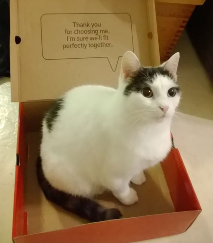 Turns Out, Cats Love Boxes So Much Because They Reduce