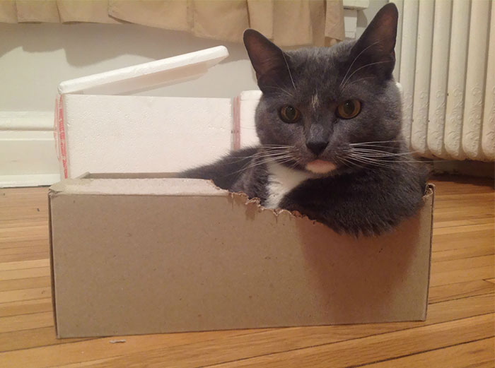 Turns Out, Cats Love Boxes So Much Because They Reduce Stress
