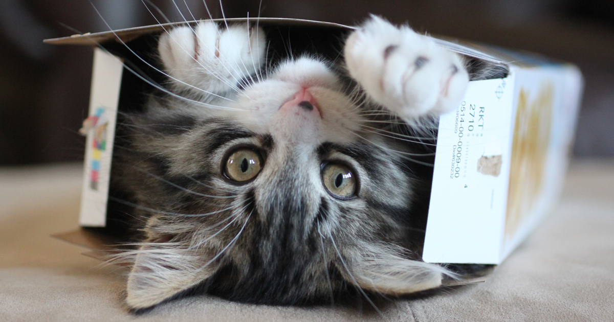 Turns Out, Cats Love Boxes So Much Because Being Inside Them Makes Them Less Stressed