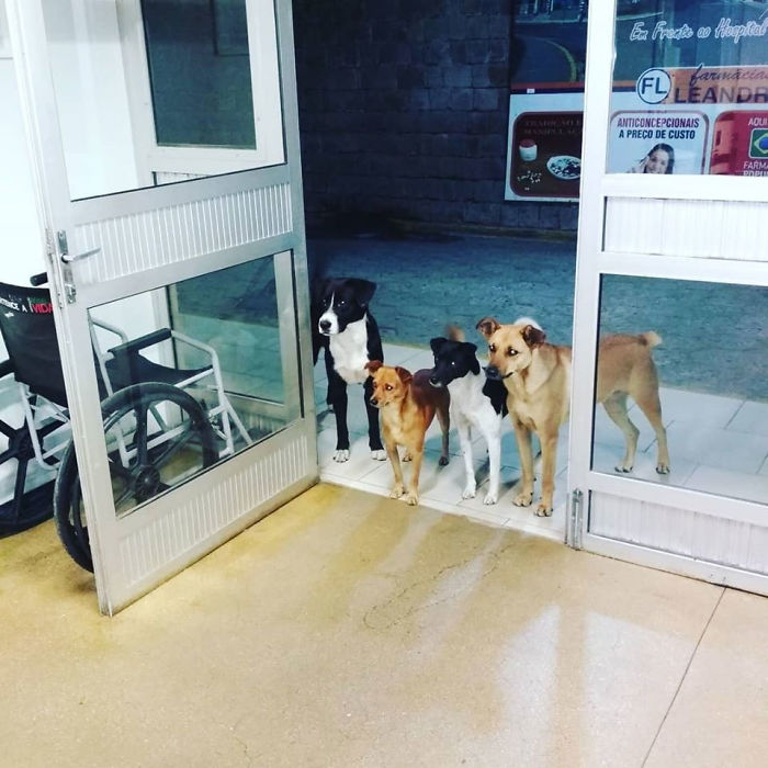 Homeless Man Goes To The Hospital, His Dog Friends Patiently Wait By The Door