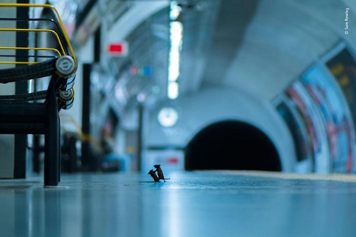 """""""Pelea en la estación"""", Sam Rowley, Reino Unido"""