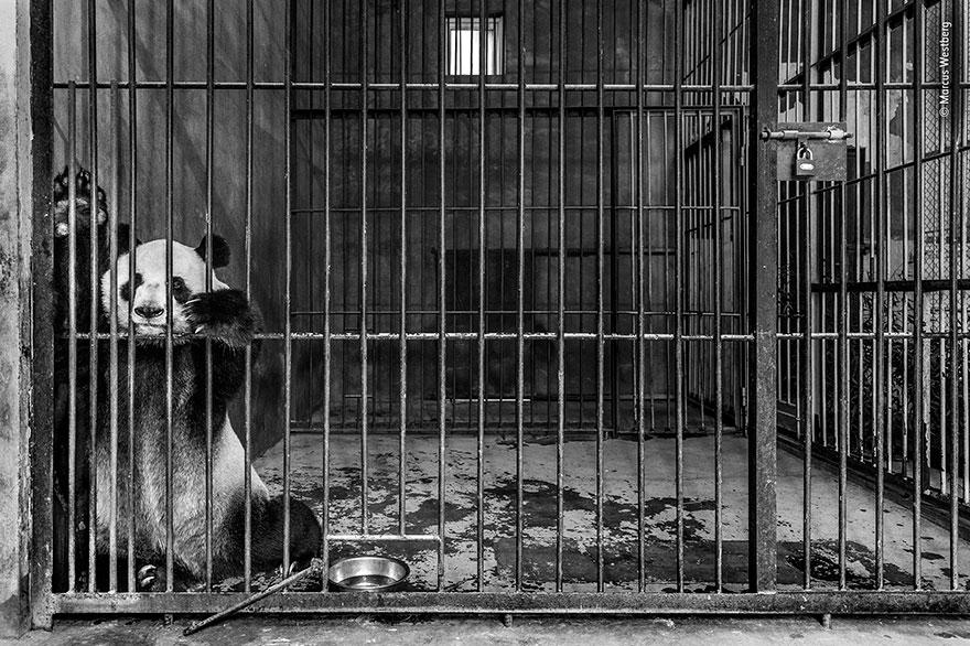 """Captive"", Marcus Westberg, Sweden"