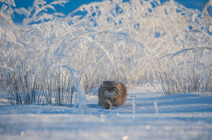 """""""Cuento de invierno"""", Valeriy Maleev, Rusia"""