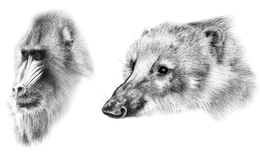One Of My Realistic Painted Animals For Brno Zoo In The Czech Republic