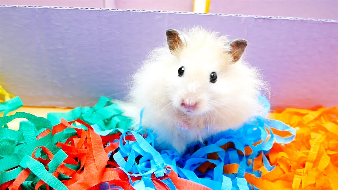 My Cute Pet Hamster Simba In Giant Funny Maze And Obstacle Course