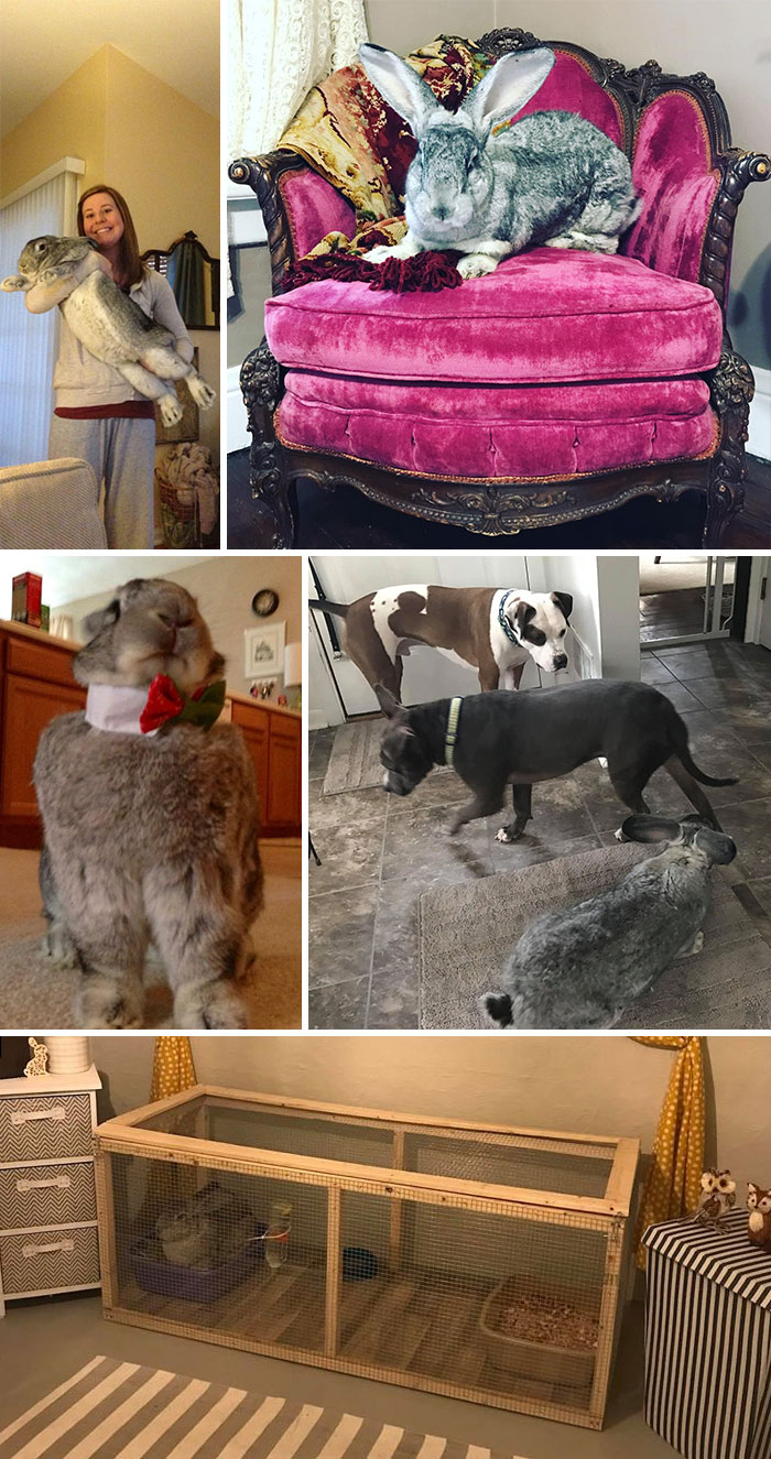 """I See Your Tiny Pets With Mini Furniture- I Give You """"My Giant Hare On A Victorian Chair!"""""""