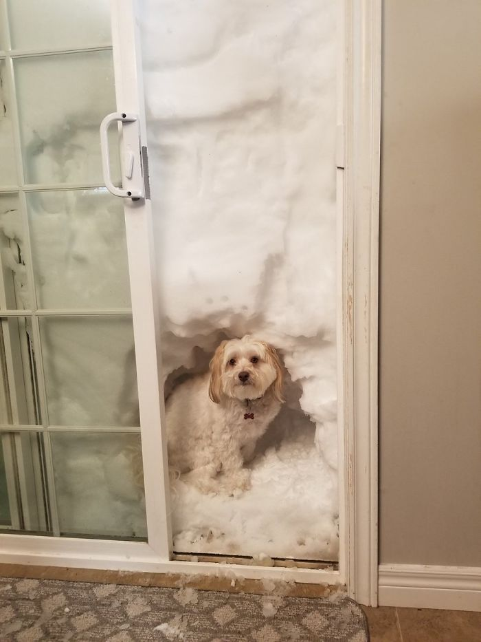 """Scooby Now Has A State-Of-The-Art """"Doggy Snow Outhouse"""""""