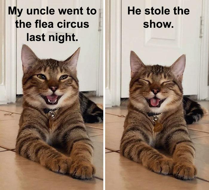 Cat-Meme-Joke