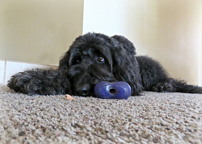 Dogs Who Have Negative Experiences Tend To Lie Awake At Night Worrying