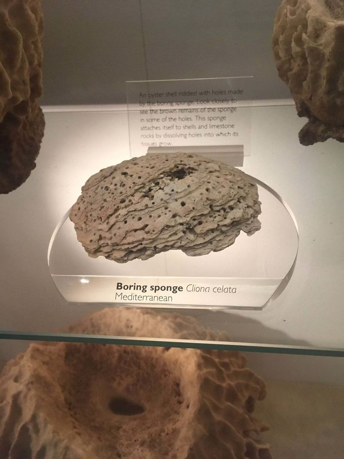 Found My Ex In The Natural History Museum