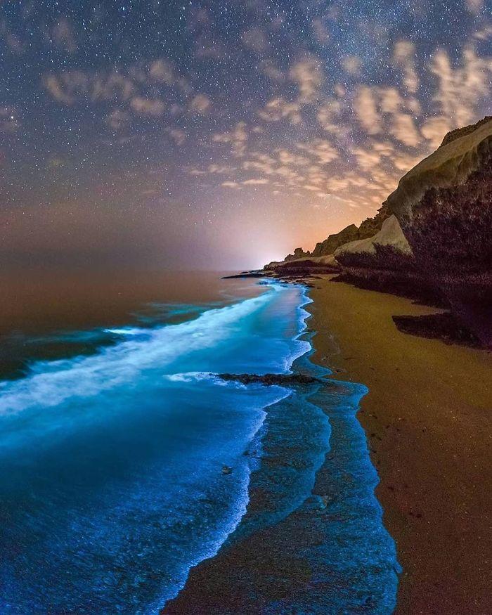 Fitoplancton bioluminiscente en el Golfo Pérsico