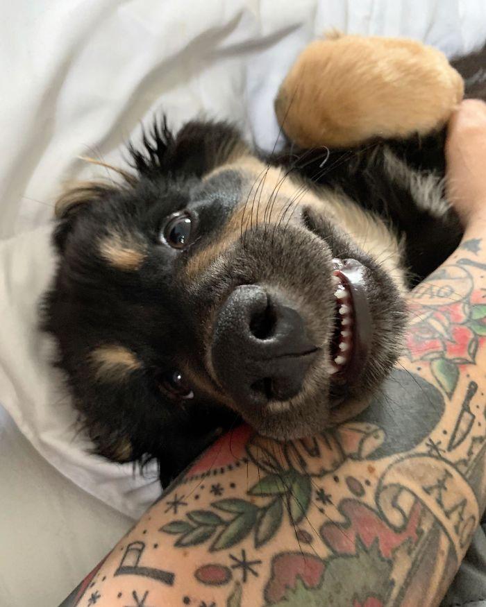 Funny-Dog-Teeth-Toofers