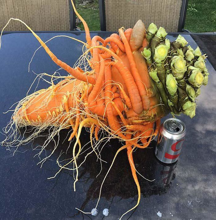 I For One Welcome Our Mutant Carrot Overlords