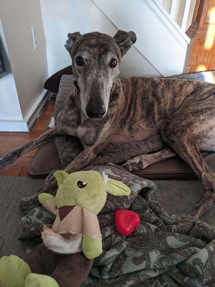 Mi perro rompió su juguete de Yoda y lo que sonaba dentro al apretarlo era un corazón