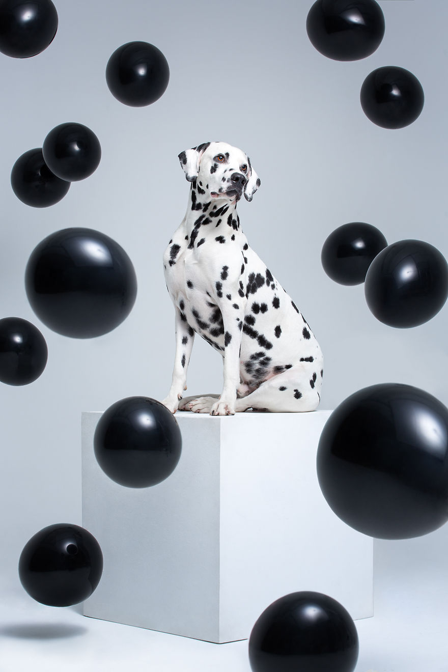 We Prove That Every Dog Can Be A Perfect Model With A Collection Of Artistic And Contemporary-Look Dog Portraits