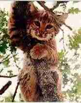 Bobcat-5e2b0ba75ce63.jpg
