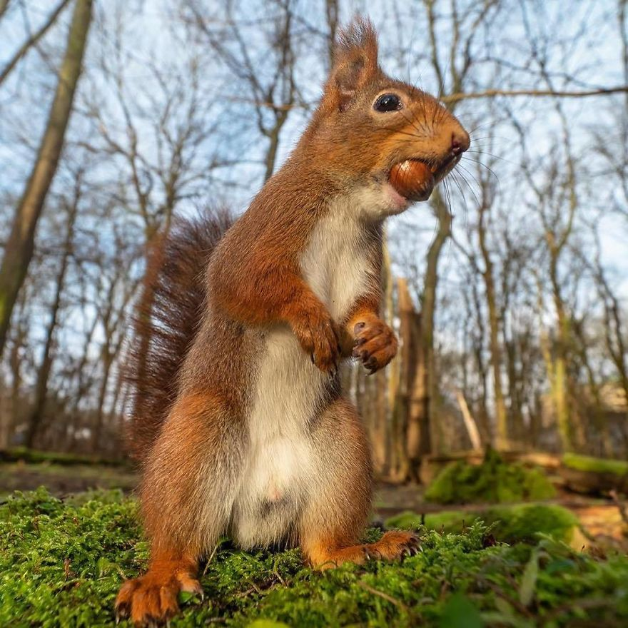 Attack Of The 50 Foot Squirrel