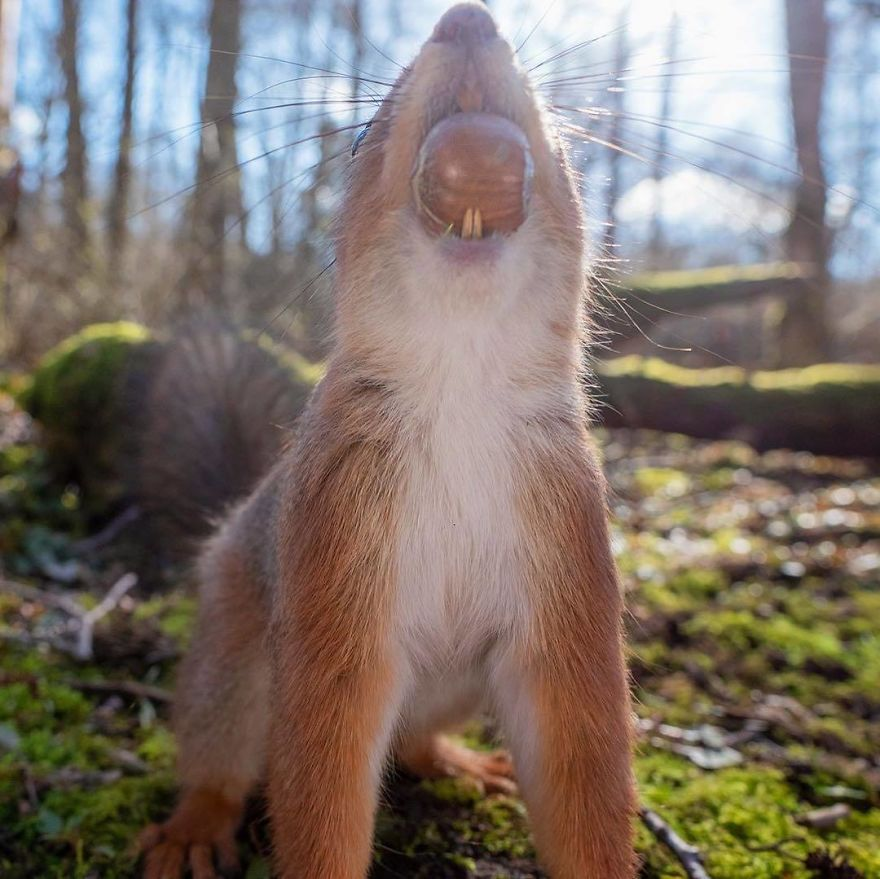 Bring!! More!! Nuts!!
