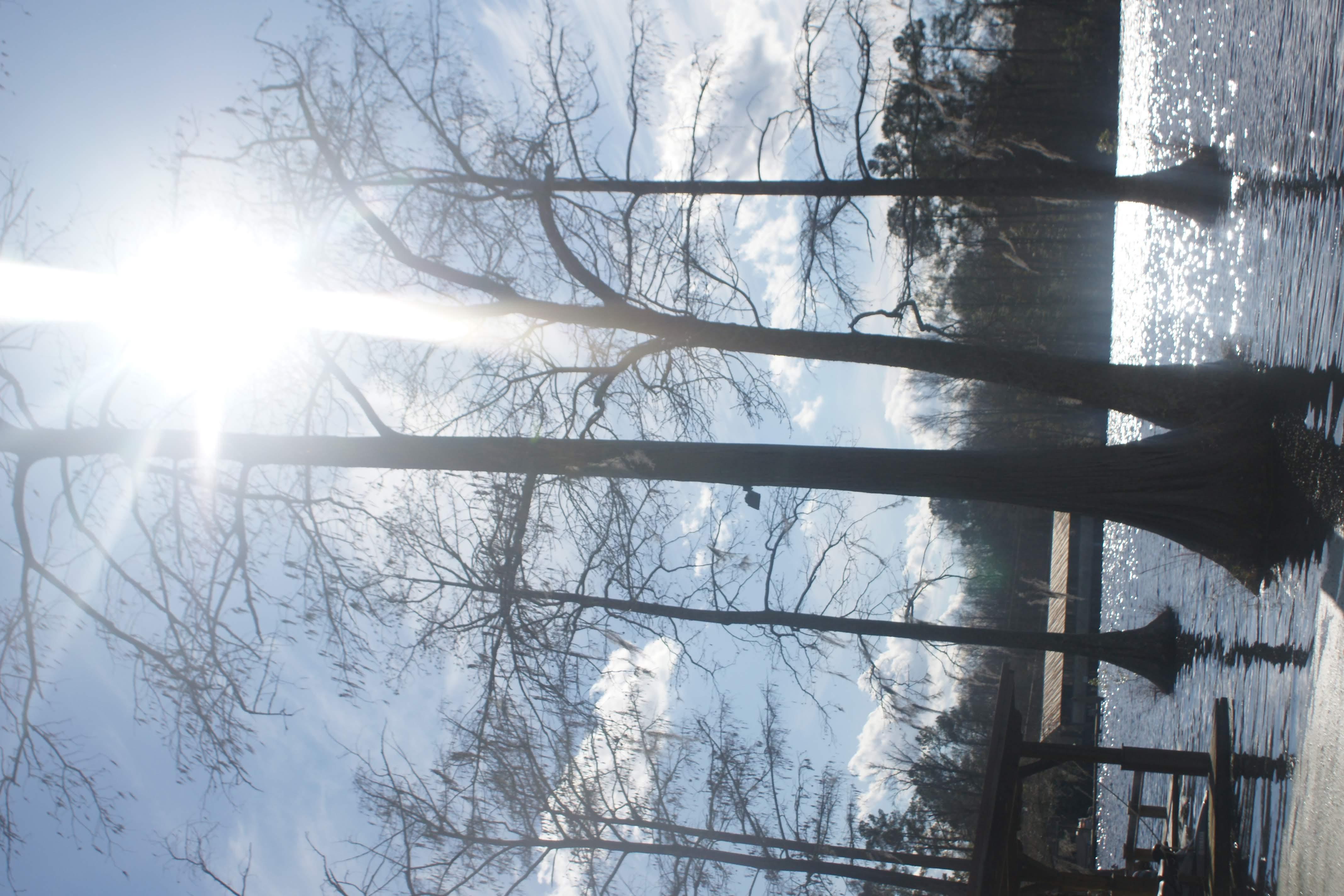 Catching The Sun Peeking Through The Staunch Cypress Trees On A Georgia Lake…
