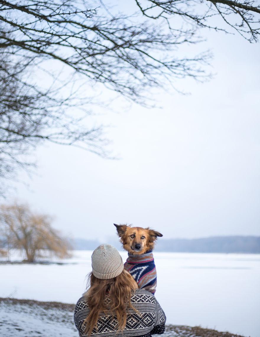 Dog-Outdoor