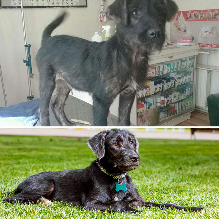 See 30 Before And After Dogs Rescued From The Streets By A Chilean Man