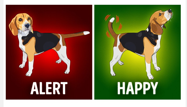 What the Body Language of 8 Pets Is Telling You