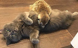 Meet A Cat And A Meerkat From St. Petersburg Who Are BFFs Since Day One, And The Pair Is Conquering The Hearts Of The Internet