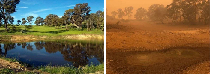 Wildlife Sanctuary In Canberra, Au Before And After Fire