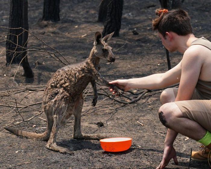 The Boy Helps The Stricken Kangaroo
