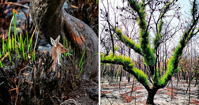 Life Is Slowly Returning To Scorched Australian Lands And Here Are 30 Hopeful Photos