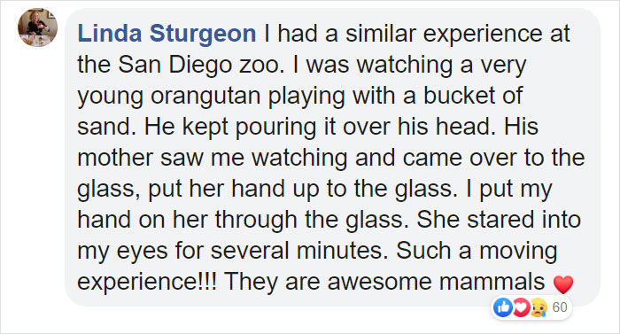 Breastfeeding Mom's Emotional Encounter With Orangutan At The Oldest Zoo In The World Goes Viral