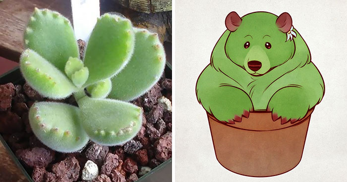 Artist Proves There's No Boundaries To Creativity By Turning Bear's Paw Succulent Into An Adorable Character