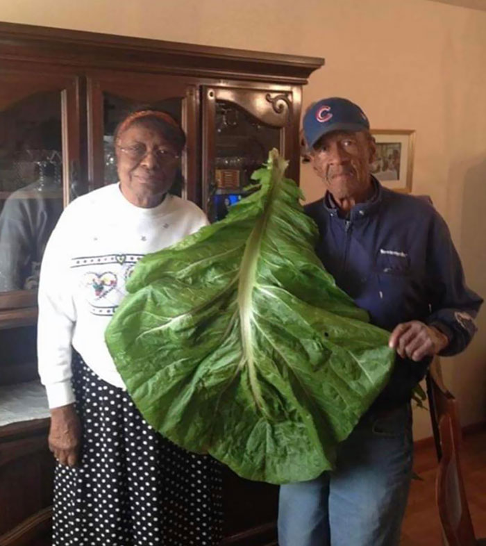 Absolute Unit Of A Collard Green