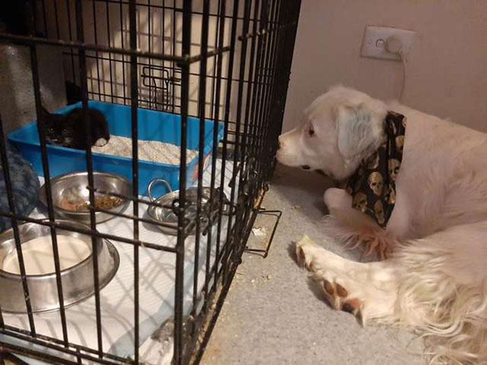 This Adorable Blind And Deaf Dog Comforts Every Foster Pet That His Owner Brings Home And It's Wholesome