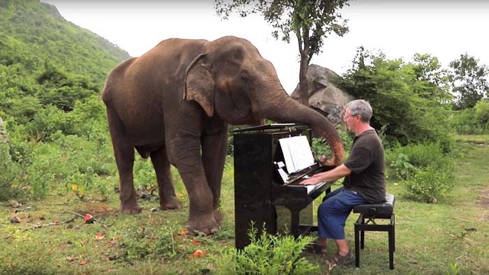 Rajzoló- , táncoló- és beszélő elefántok? Ezeknek az állatoknak az  intelligenciája kiemelkedőbb, mint azt gondolnánk. Egyszerűen csodálatosak!
